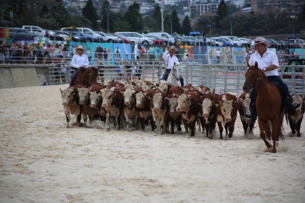 herd-of-hope-bondi-1