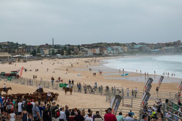 herd-of-hope-bondi-4