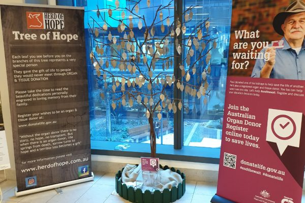 Tree of Hope wide view
